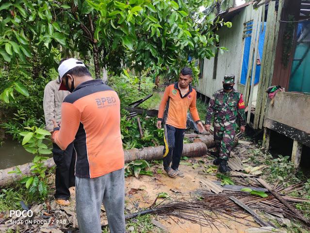 Cepat dan Tanggap, Babinsa Panajam Bantu Evakuasi Rumah Warga yang Tertimpa Pohon Kelapa