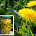 A Dandelion Cures Cancer, Liver, Stomach, Hepatitis, Kidneys. This is How To Prepare