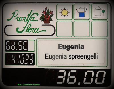 onde encontro para comprar Eugenia sprengelli