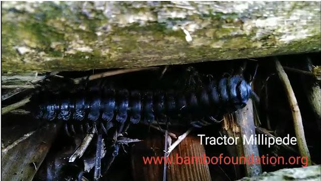 Traktor Millipede