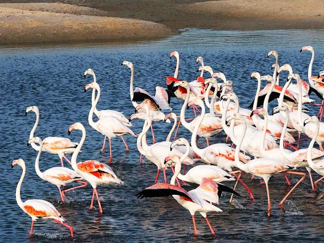 Ras al khor - Wildlife Sanctuary
