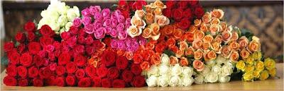 toko bunga mawar yang bagus di jakarta