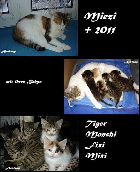 *** Miezi ***        + 2011