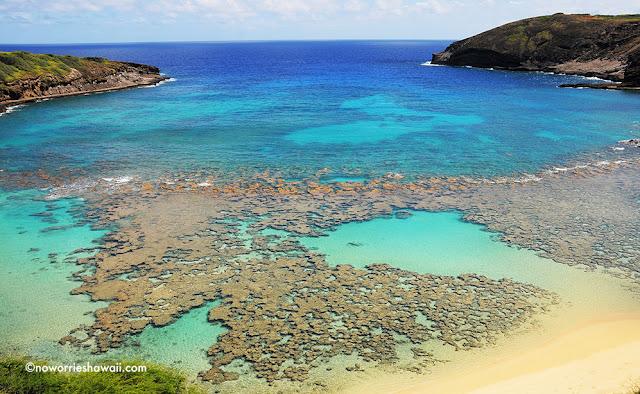 Hanaumau Bay Snorkeling Oahu Hawaii