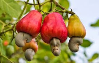 Health benefits of Cashew fruits