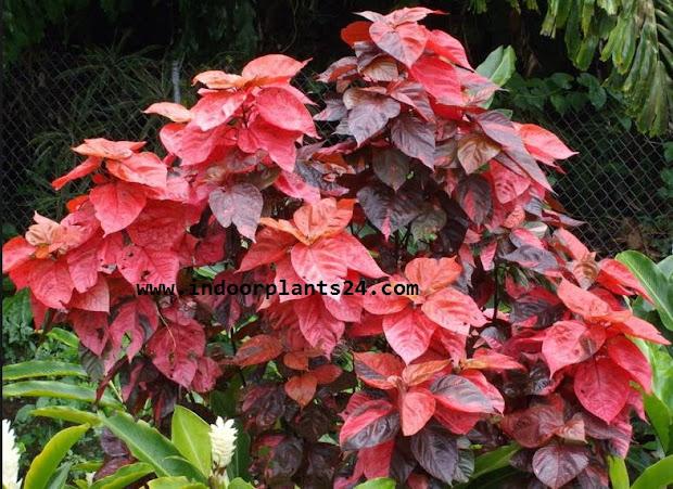 25 Red Copper Landscape Plants Pictures And Ideas On Pro Landscape