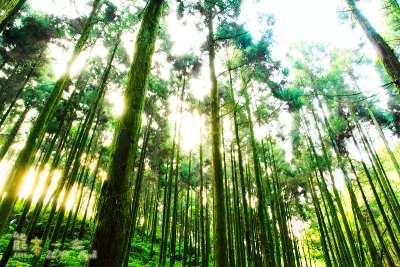 三峽人的後花園|有木里-插角里-竹崙里-安坑里-五寮里美食景點資訊