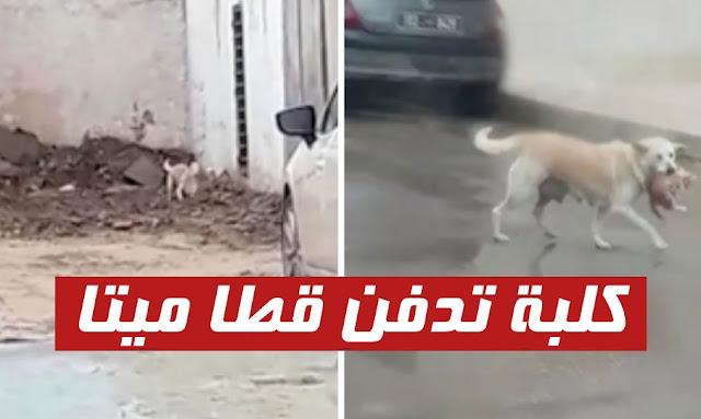 بالفيديو ... في شوارع رادس : كلبة تُكرِم قطا ميّتا .. وتقوم بدفنه !