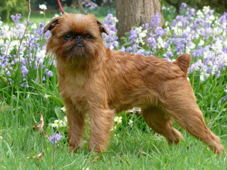 Dog Breeds That Are Okay By Themselves