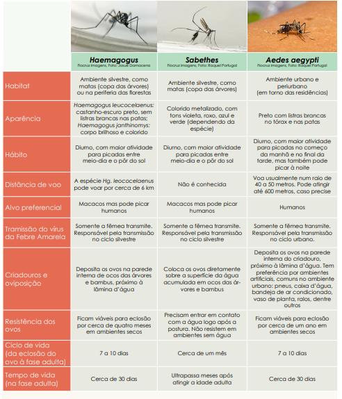 Haemagogus, Sabethes e Aedes aegypti: semelhanças e diferenças