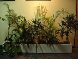 Zen y feng shui tao curas feng shui para la suerte for Plantas para interiores feng shui
