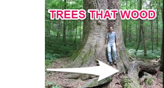 MORAL STORIES:TREES THAT WOOD