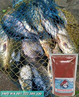 Umpan Ikan Mas Tombro Khusus Indukan