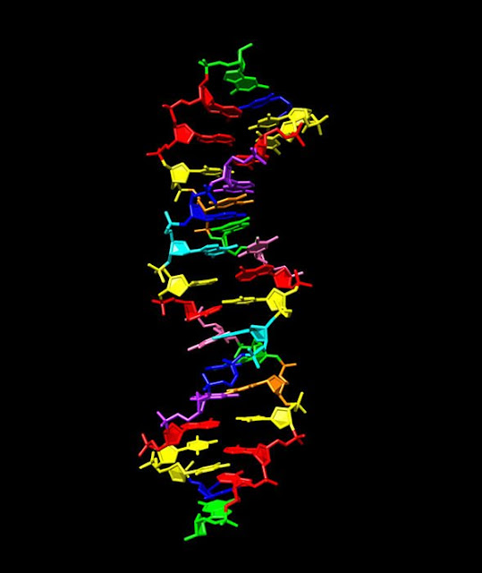 This-is-the-image-of-the-NASA-Alien-DNA-strand.