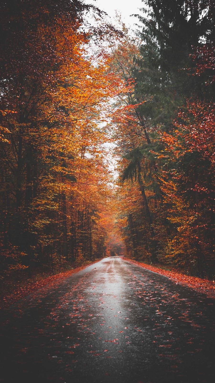 Đường vào mùa thu tĩnh lặng