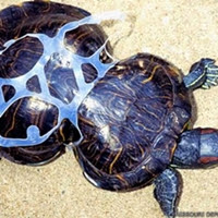 Dia 16 de Junho é o Dia Internacional da Tartaruga Marinha, mas independentemente disso, cada vez mais se faz necessária a prática do consumo consciente e a de dar fins adequados ao que descartamos.