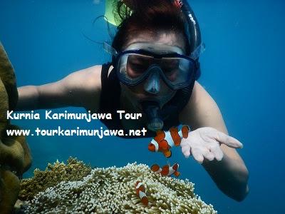 foto ikan nemo karimunjawa