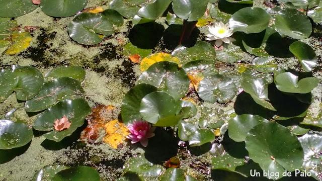 Vegetación en las fuentes y lagos de El Capricho