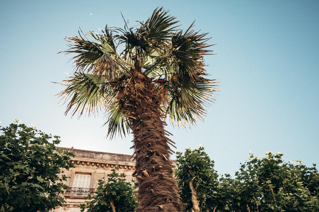 biarritz palm tree