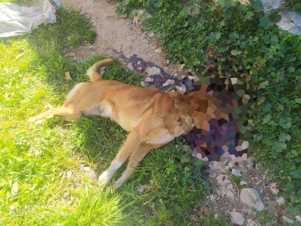 Αργολίδα: Σκότωσε με καραμπίνα σκύλο στη Μιδέα - Σύλληψη του δράστη από την αστυνομία