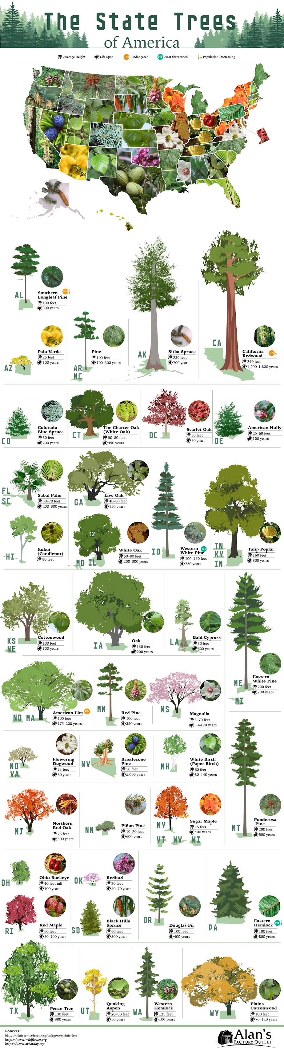 The State Trees of America #infographic #Plants #infographics #Trees of America #State Trees #Trees