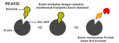 Mekanisme Cara Kerja Enzim