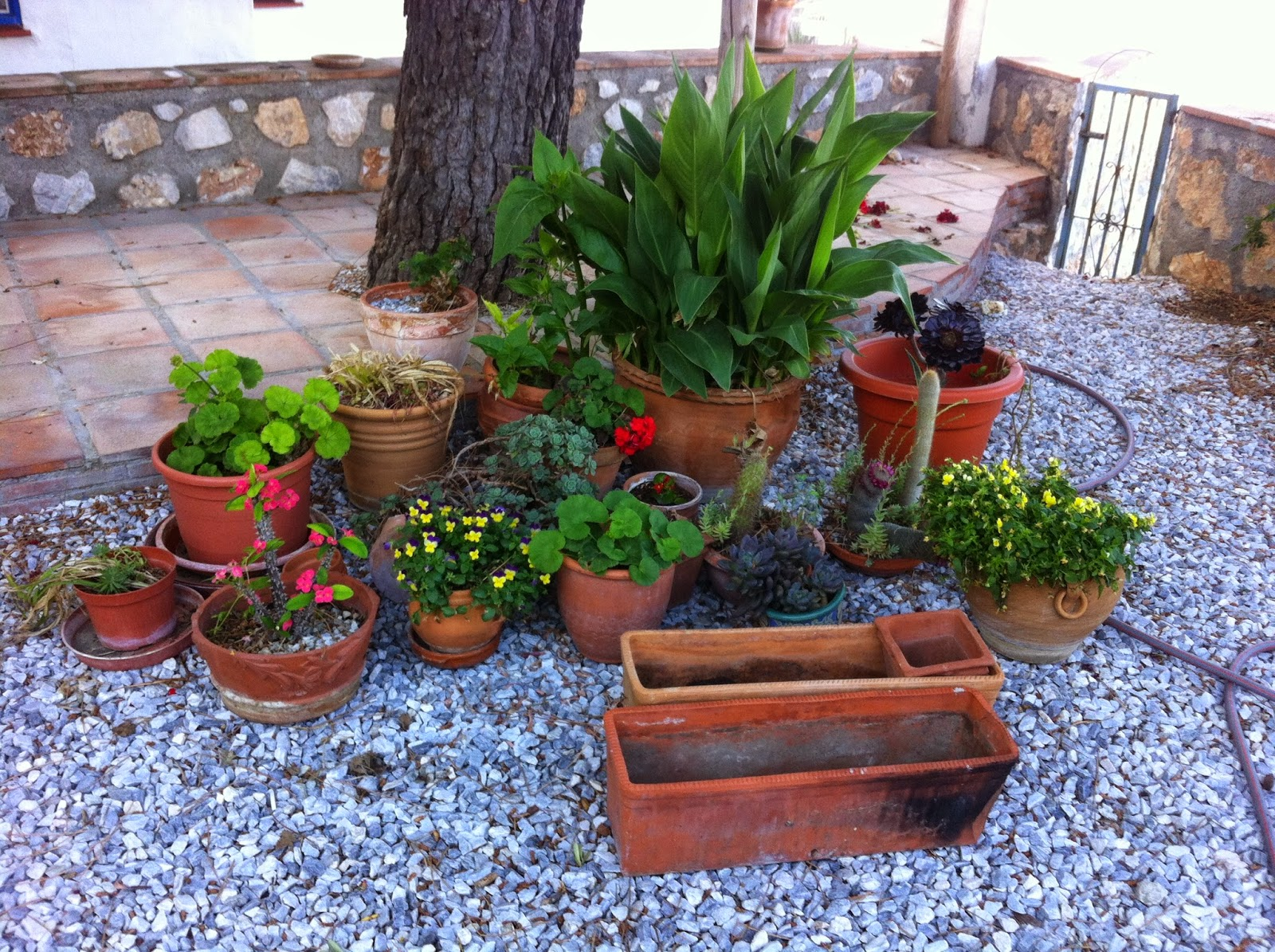 Plant Pot Sale Digame For Sale 40 Plant Pots And Plants
