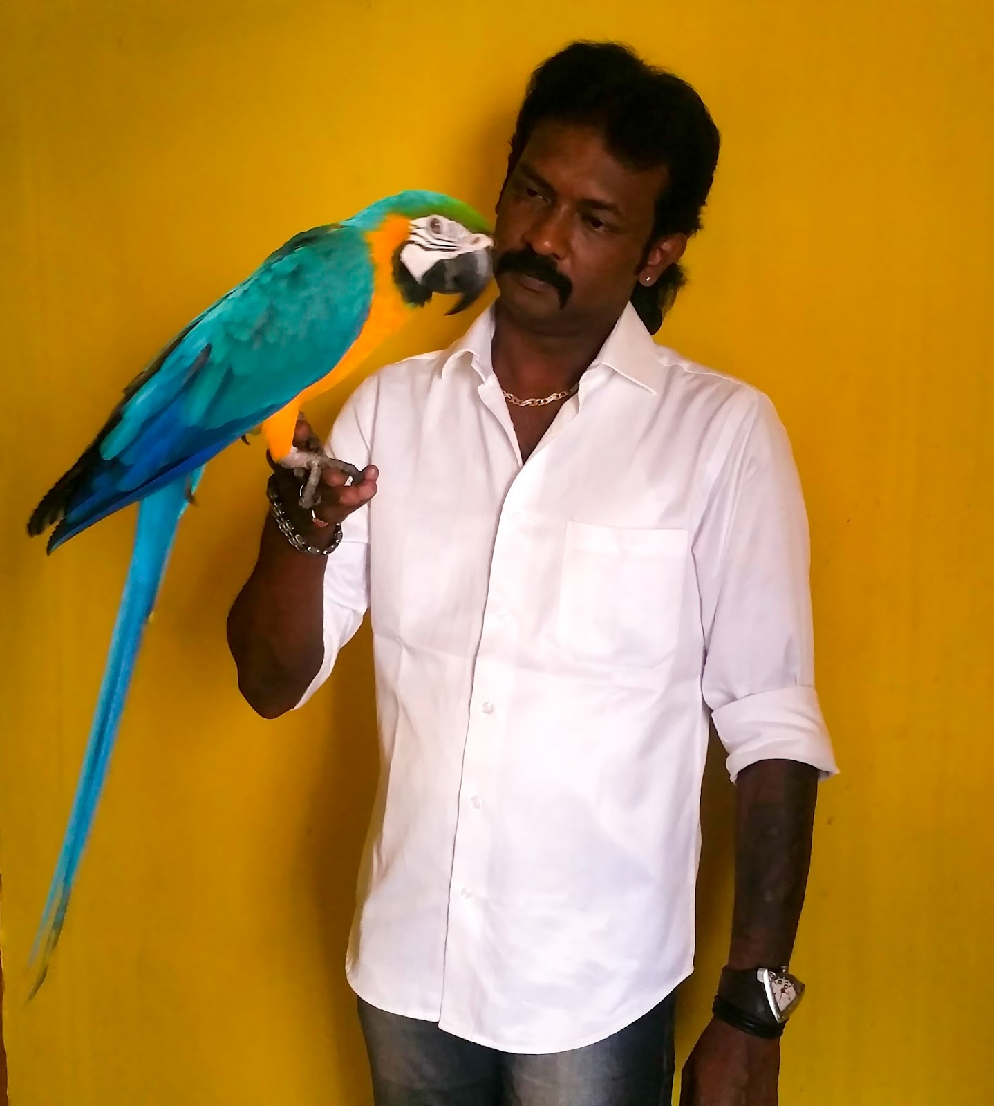 Preethi Farms Exotic Birds Breeders Hand Tamed Baby