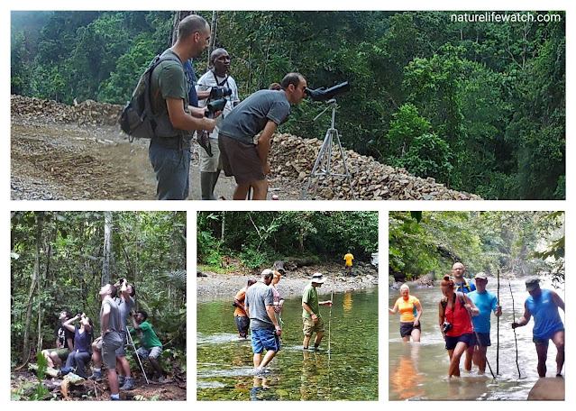 Pemandu wisata di Papua Barat