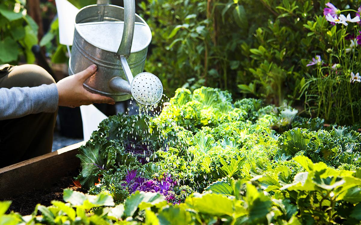 Hortas em casa pode resolver problemas de insegurança alimentar