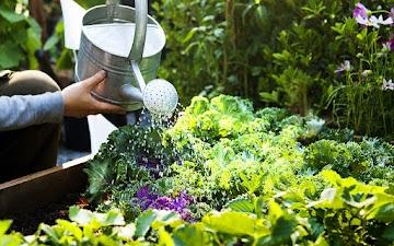 Horta em casa pode resolver problemas de insegurança alimentar