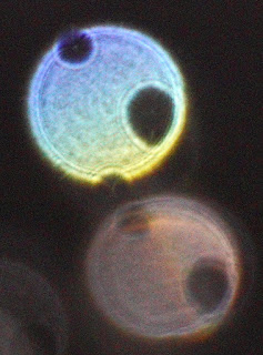 orbs with two holes