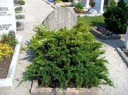 [source: Bauer Ute (Find A Grave)]