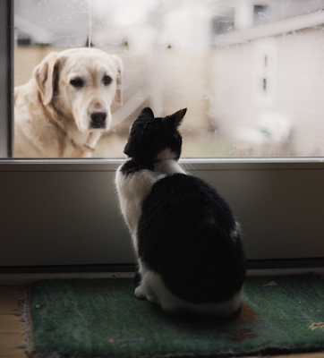 A Golden Retriever looks through a door at a cat sitting inside