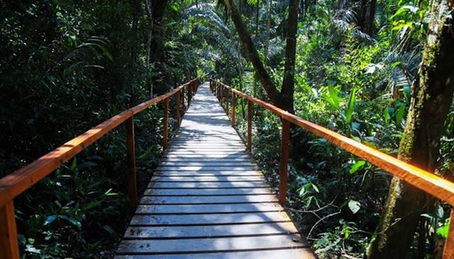 Conservación de bosques amazónicos