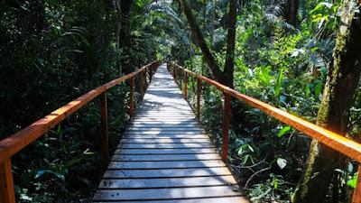 Proyectan conservar 10 millones de hectáreas de bosques en la amazonia peruana