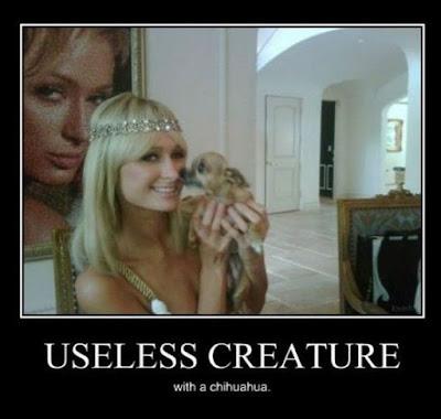 Useless Creature Joke