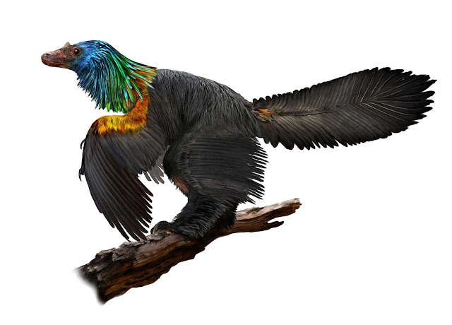 'Rainbow' dinosaur had iridescent feathers like a hummingbird