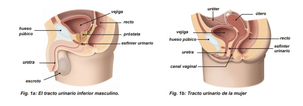 Urología Peruana: Dr. Susaníbar: Cómo realizar los ejercicios del ...