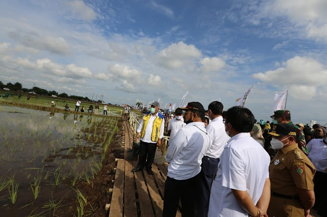 Kementan Maksimalkan Lahan Dadahup Dukung Food Estate Kalteng
