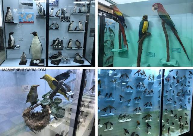 Aves Museo Ciencias Naturales Sofía Bulgaria