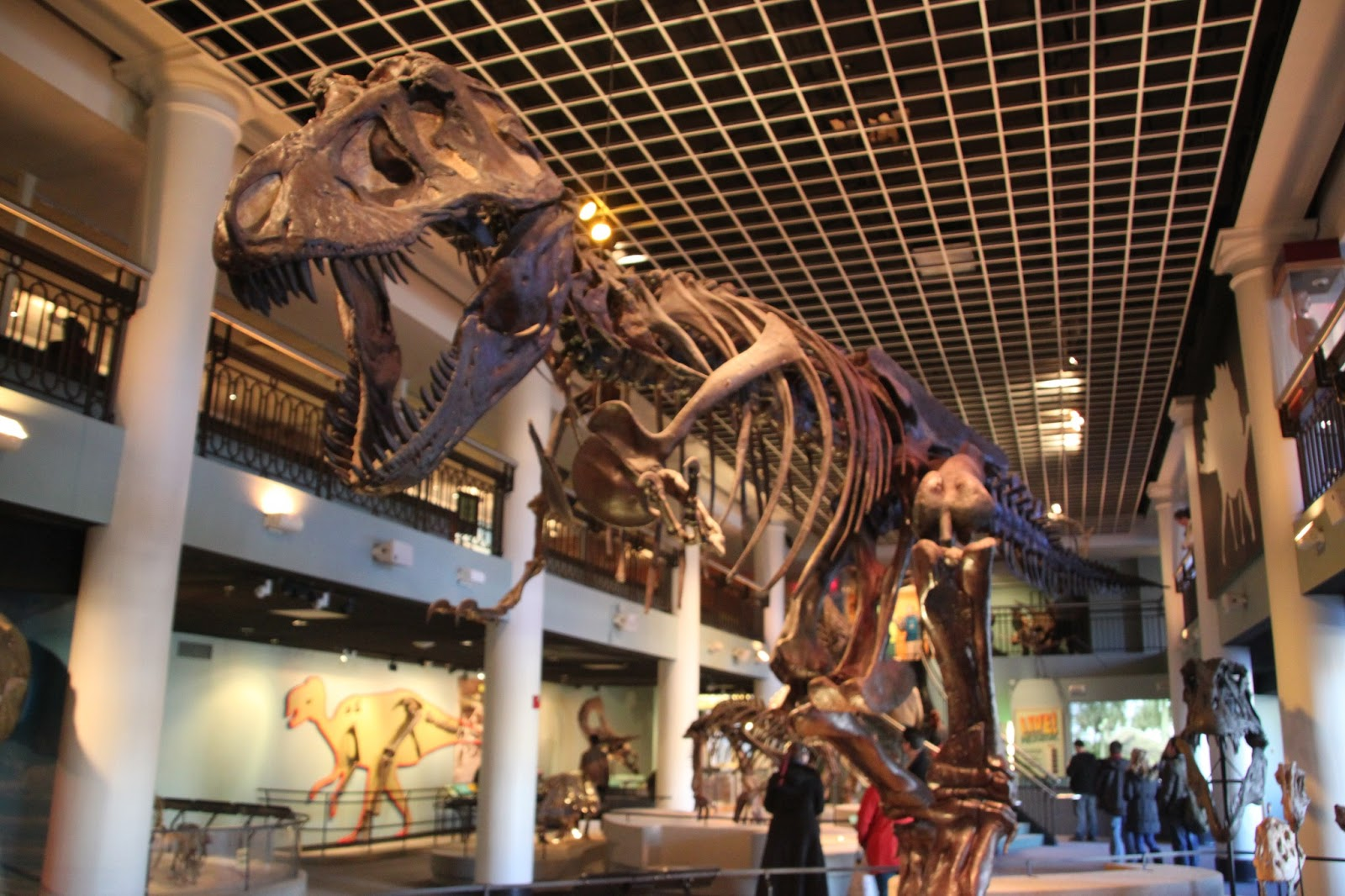 The Museum Of Natural Science Philadelphia