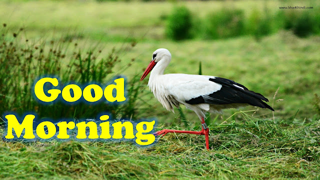 Good Morning Birds Images download