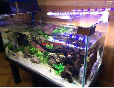 Hướng dẫn những bước ban đầu với việc nuôi cá cảnh ở bể mini trong nhà