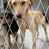 Lukavac: Odobrena sredstva za tretman napuštenih životinja
