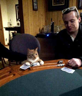 Cat plays a hand