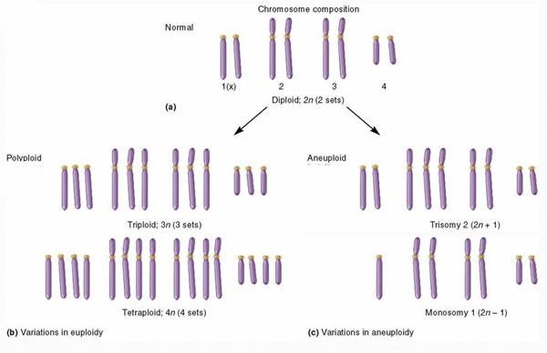 Poliploidi dan aneuploidi