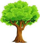 वृक्षाचे मानवी जीवनातील स्थान निबंध / वृक्षांचे महत्व निबंध मराठी