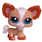 Littlest Pet Shop Special Chihuahua (#1082) Pet