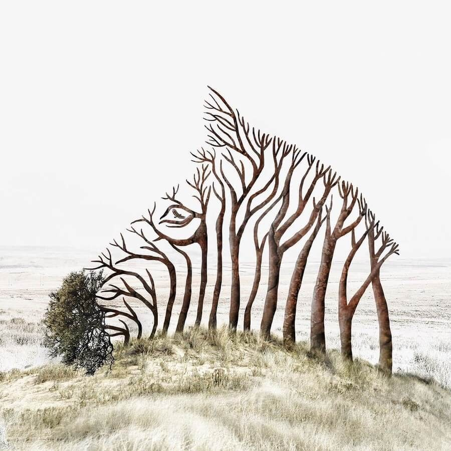 12-Zebra-Tree-Luisa-Azevedo-www-designstack-co